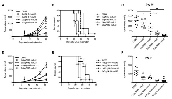 The anti-tumor activity of NHS-muIL12 is dose-dependent and is unaffected by dose fractionation.