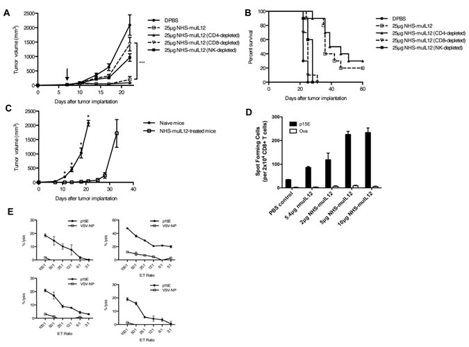 The anti-tumor activity of NHS-muIL12 depends on CD8+ T cells.