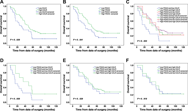 Kaplan-Meier survival analysis of CALR and PDIA3 expressions in NSCLC.