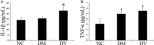 IL-1β and TNF-α levels in the serum of each group.