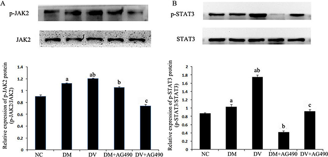Protein levels of JAK2, STAT3 and phosphorylated STAT3.