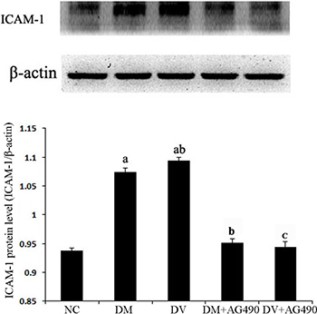 The ICAM-1 protein level in the various cell groups.