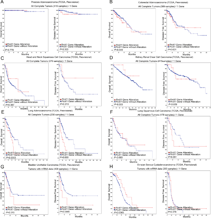 PinX1 gene alteration associated with overall survival and disease-free survival in eight selective studies using cBioportal.