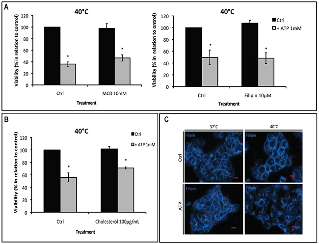 Hyperthermia-increased P2X7 functionality is independent of lipid rafts.