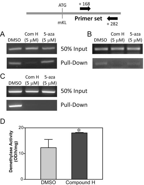 Effect of compound H on DNA demethylation.