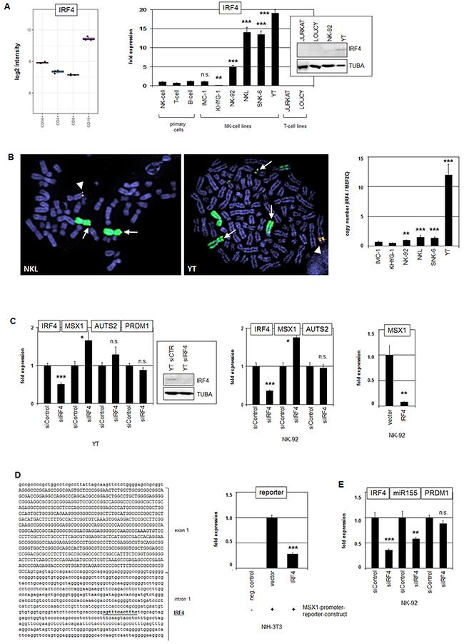 Analysis of IRF4: expression, genomics and target gene regulation.
