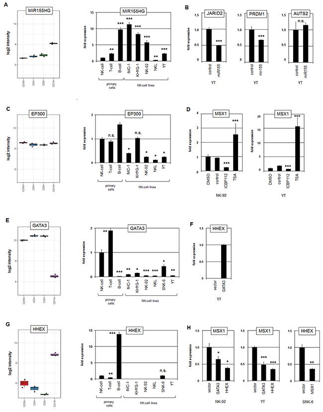 Analysis of MIR155HG, EP300, GATA3 and HHEX.