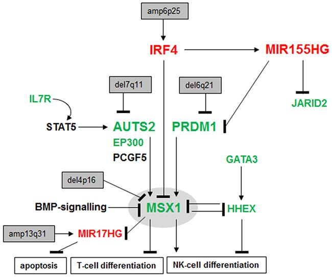 Deregulated gene regulatory network in NK-cell leukemia.