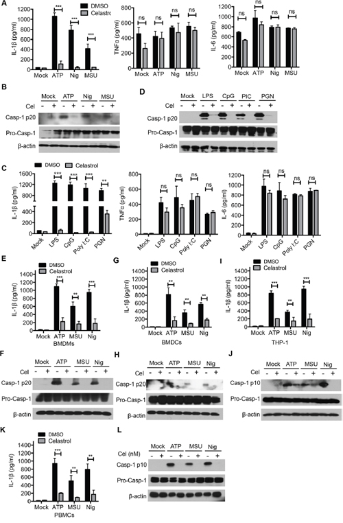 Celastrol inhibits NLRP3 inflammasome activation in various stimulus and different cell types.