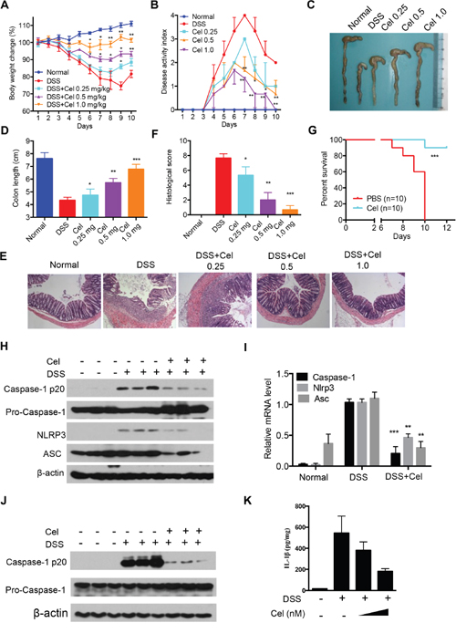 Celastrol ameliorates DSS-induced colitis in mice.