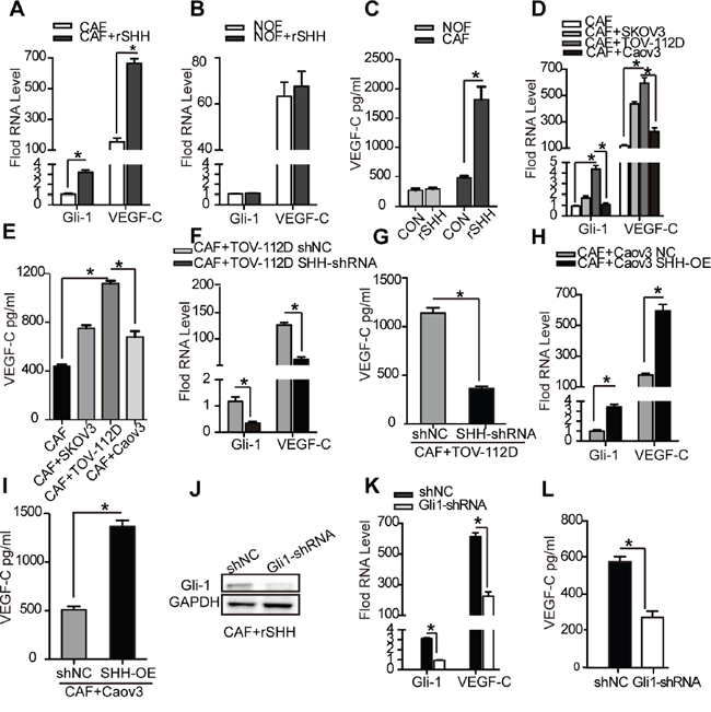VEGF-C is a CAF-derived lymphangiogenesis factor induced by SHH.