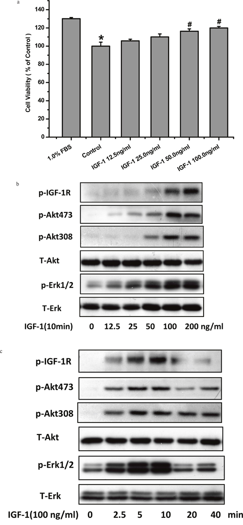 IGF-1 enhanced cell viability and activated IGF-1R, AKT, ERK1/2 signaling in SH-SY5Y cells.