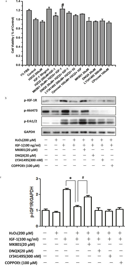 MK-801 restores IGF-1R, AKT and ERK1/2 phosphorylation stimulated by IGF-1 and the protective effect of IGF-1 in SH-SY5Y cells.