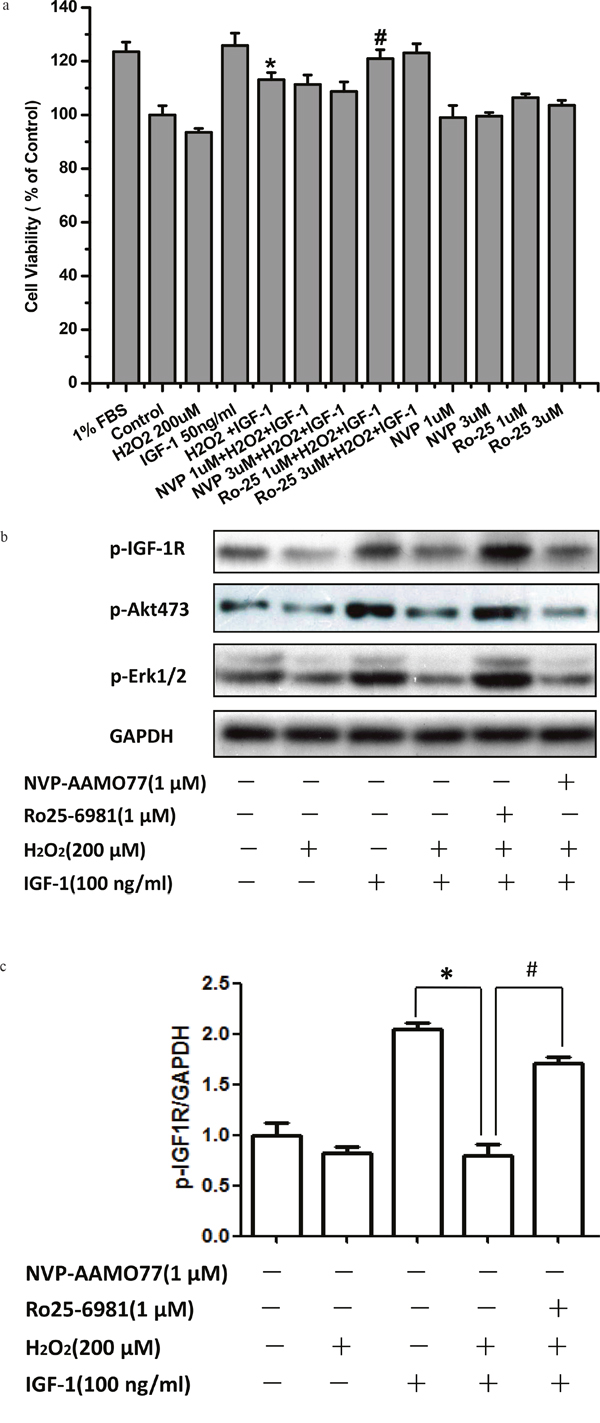 NR2B inhibitor abolished the inhibitory effect of H2O2 on the pro-survival signaling and effects of IGF-1 in SH-SY5Y cells.