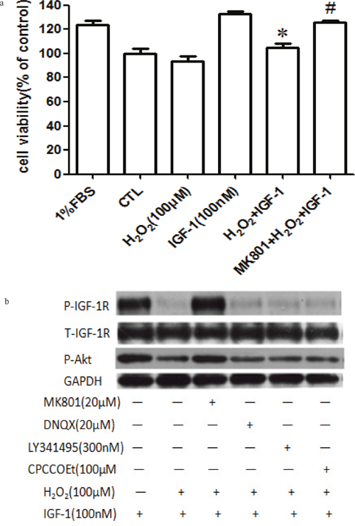 MK-801 restores IGF-1R, and AKT phosphorylation stimulated by IGF-1 and the protective effect of IGF-1 in primary cultured cortical neurons.