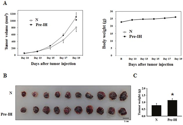 Tumor growth in mice in the no-conditioning (N) and pre-intermittent, hypoxia-conditioning (Pre-IH) groups.