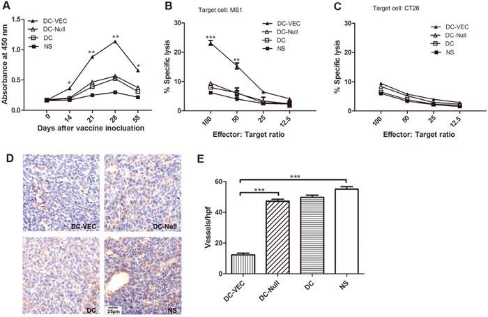 Anti-angiogenesis response in vivo.