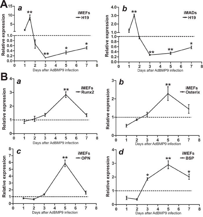 Expression levels of lncRNA H19 and osteogenic markers in BMP9-induced osteogenic differentiation of MSCs.