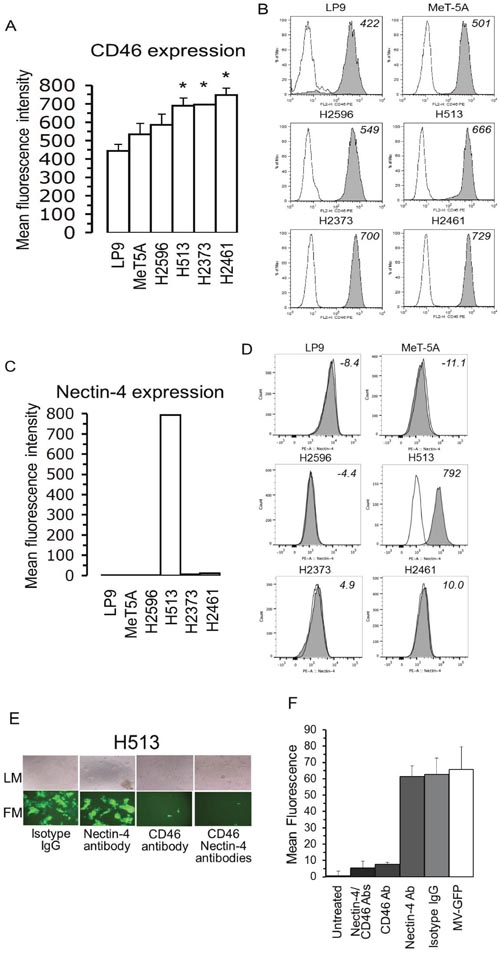 In mesothelioma CD46 levels are elevated and host cell entry is reliant on CD46 receptor and not nectin-4.