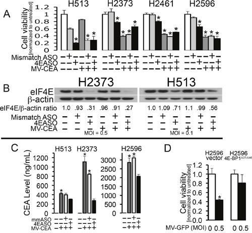 Measles virus potency is reduced during inhibition of host cell translation.