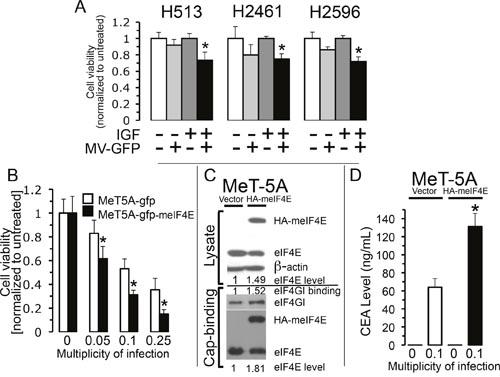 Stimulation of host cell translation enhances measles virus activity.