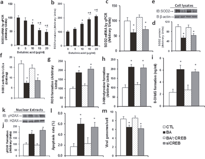 Betulinic acid (BA) suppresses SOD2 expression with increased ROS formation in LCL cells.