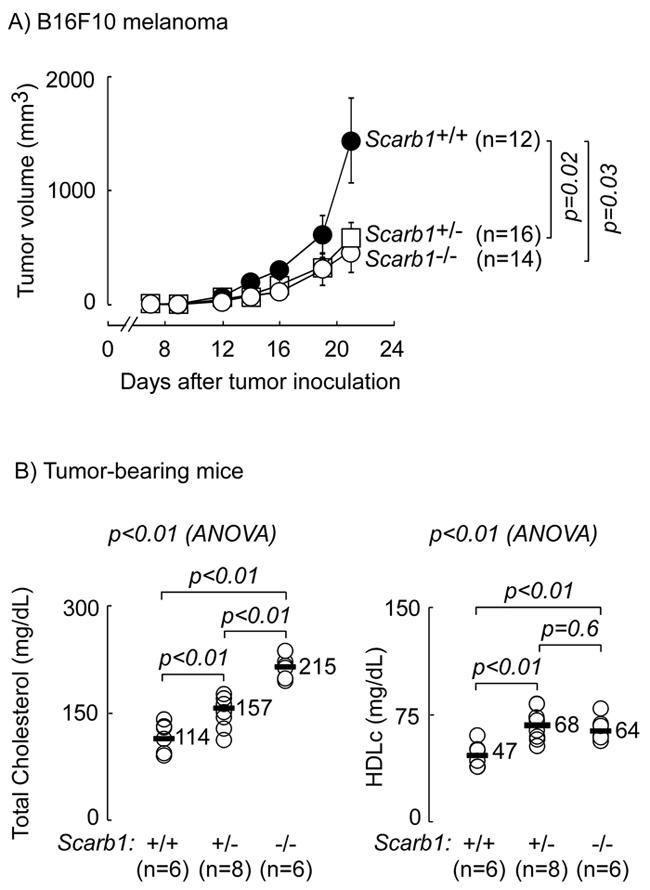 Global deletion of scavenger receptor B1 (SR-B1) is protective against melanoma.