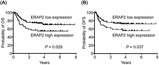 Association of high ERAP2 expression with poorer prognosis of patient survival.