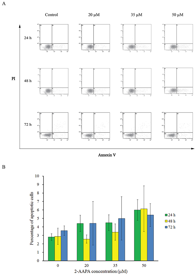 Effect of 2-AAPA on the induction of apoptosis in TE-13 cells.