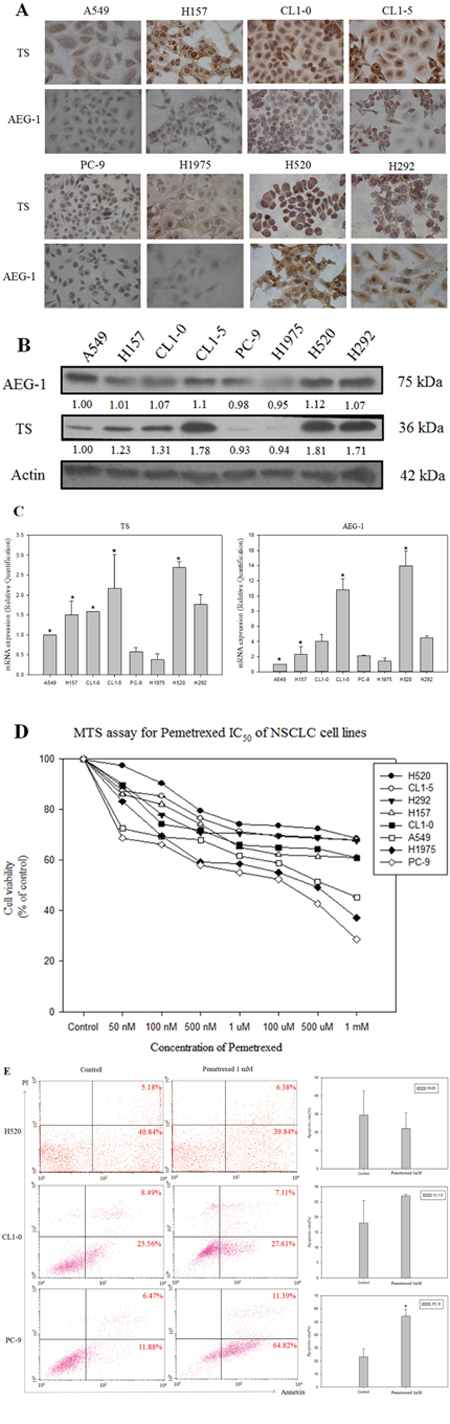 Expression of astrocyte-elevated gene-1 and thymidylate synthase in several non-small cell lung cancer cell lines.