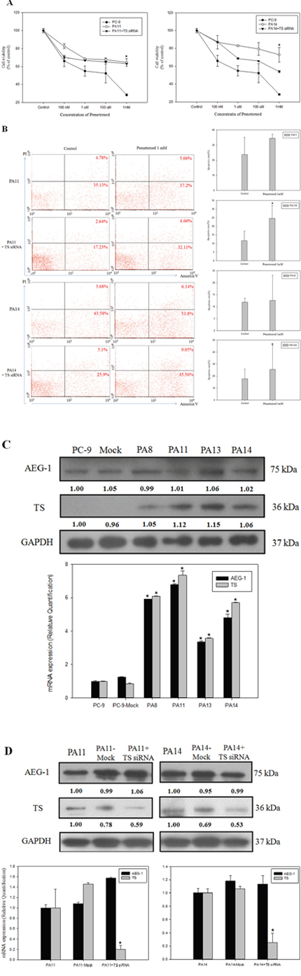 Overexpression of astrocyte-elevated gene-1 induced thymidylate synthase expression and elevated resistance to pemetrexed.