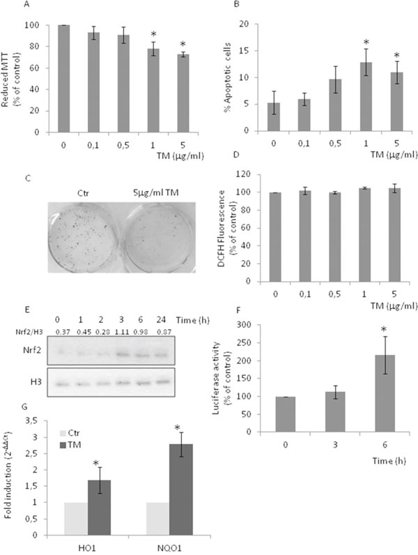 Tunicamycin causes Nrf2 activation in the absence of increased levels of ROS.