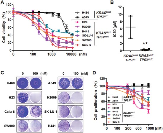 Mutational status of TP53 determines the effectiveness of AZD1775 in KRASMUT lung cancer.