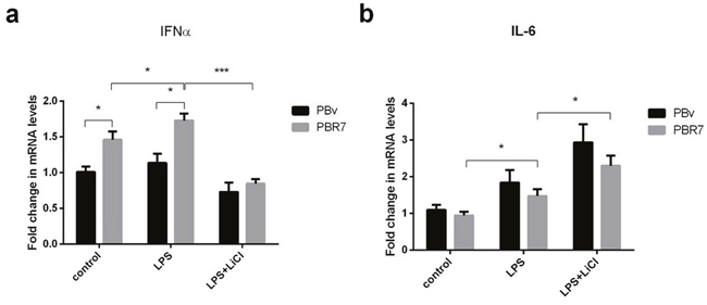 Effect of swine IRF7 on the expression of IFNα and IL-6.