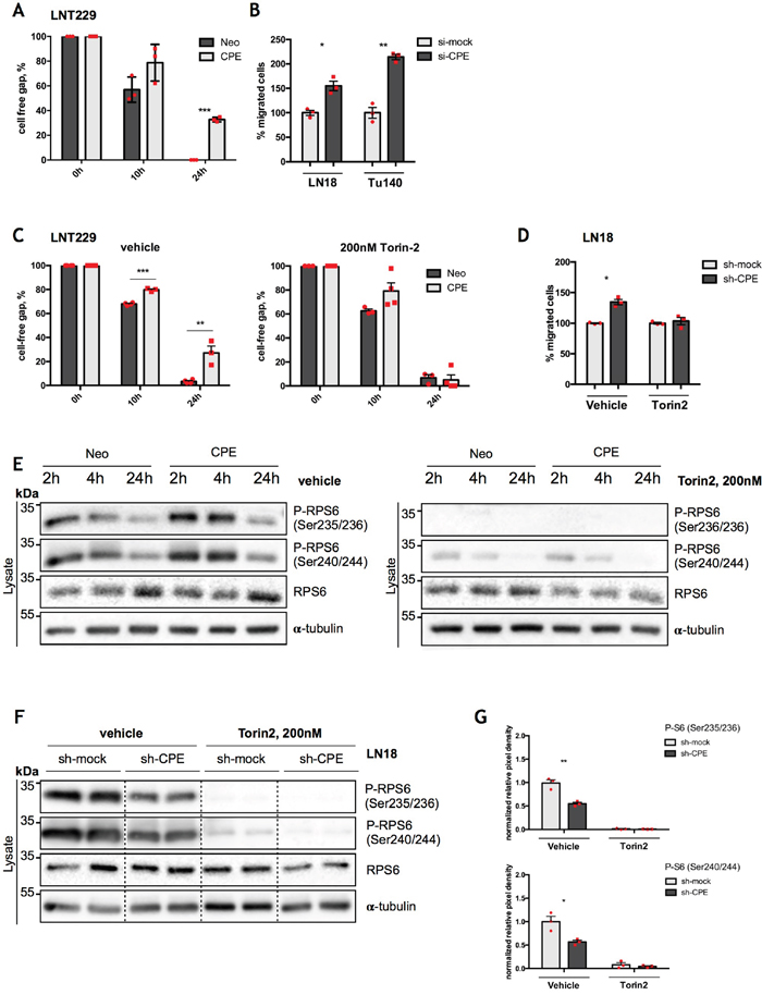 RPS6 mediates anti-migratory effects of sCPE.