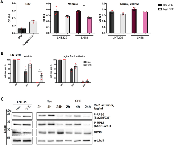 RPS6 mediates anti-migratory effects of sCPE over Rac1.