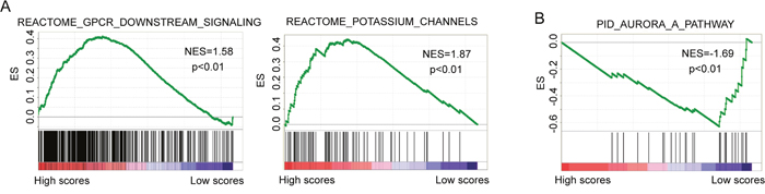 Gene set enrichment analysis from gene expression profiles of 109 patients in the high-risk and low-risk groups.