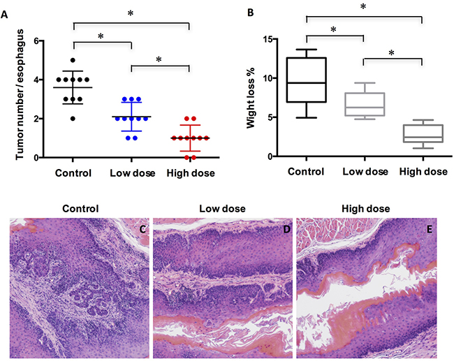 Treatment of A-1210477 inhibits ESCC formation in mice.