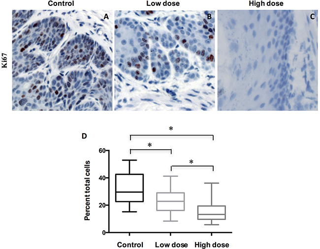 Treatment of A-1210477 decreased cell proliferation in mouse ESCC.