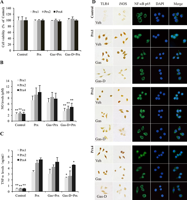 Effects of gastrodin (Gas) and its derivative (Gas-D) on the peroxiredoxin (Prx)-induced inflammatory response in macrophages.