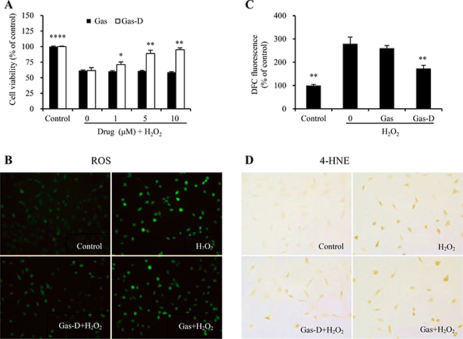 Effects of gastrodin (Gas) and its derivative (Gas-D) on H2O2-induced oxidative injury in nerve cells.