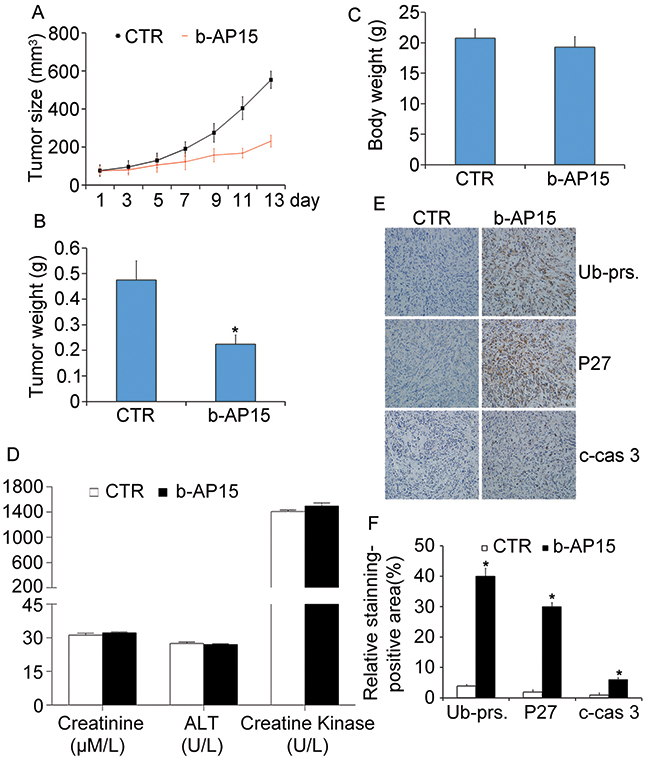 b-AP15 treatment inhibited tumor growth in vivo.