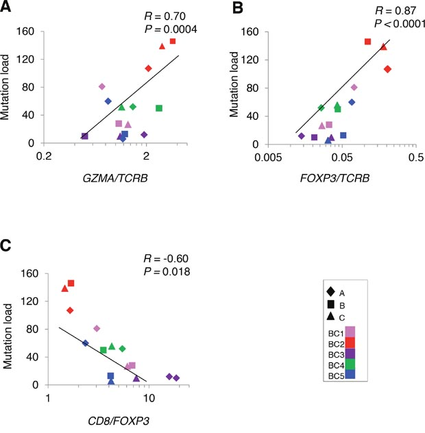 Correlation analysis between non-synonymous mutations and the mRNA expression level of immune-related genes in tumors.