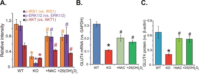 Oncotarget | Insulin resistance in vitamin D-deficient mice is