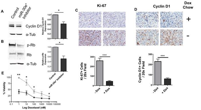 The miR-30e*: IκBα axis regulates cyclin D1 and proliferation in vivo.