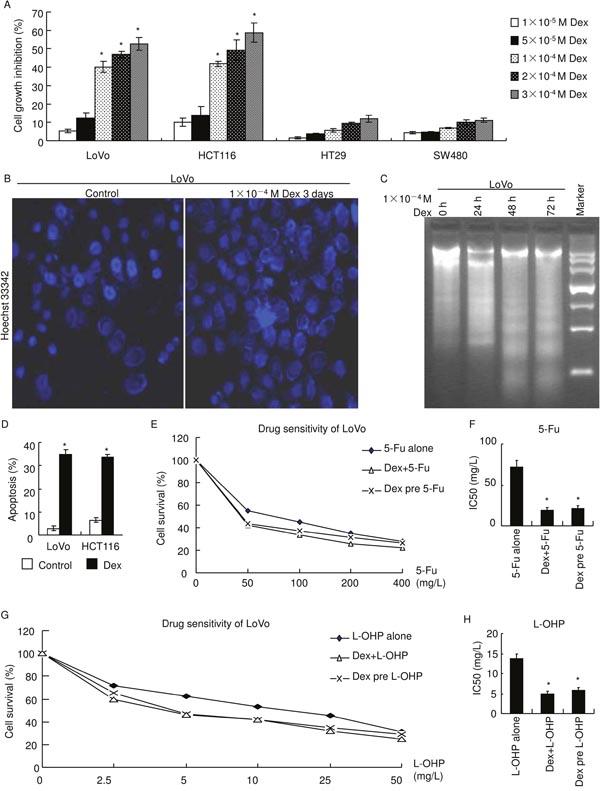 GRα agonist, dexamethasone, inhibits cell growth, induces apoptosis and enhances chemosensitivity.