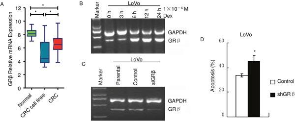 GRβ decreases apoptosis induced by dexamethasone in LoVo.