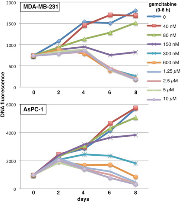 Concentration and time dependent cytotoxicity induced by gemcitabine in MDA-MB-231 and AsPC-1 cells.