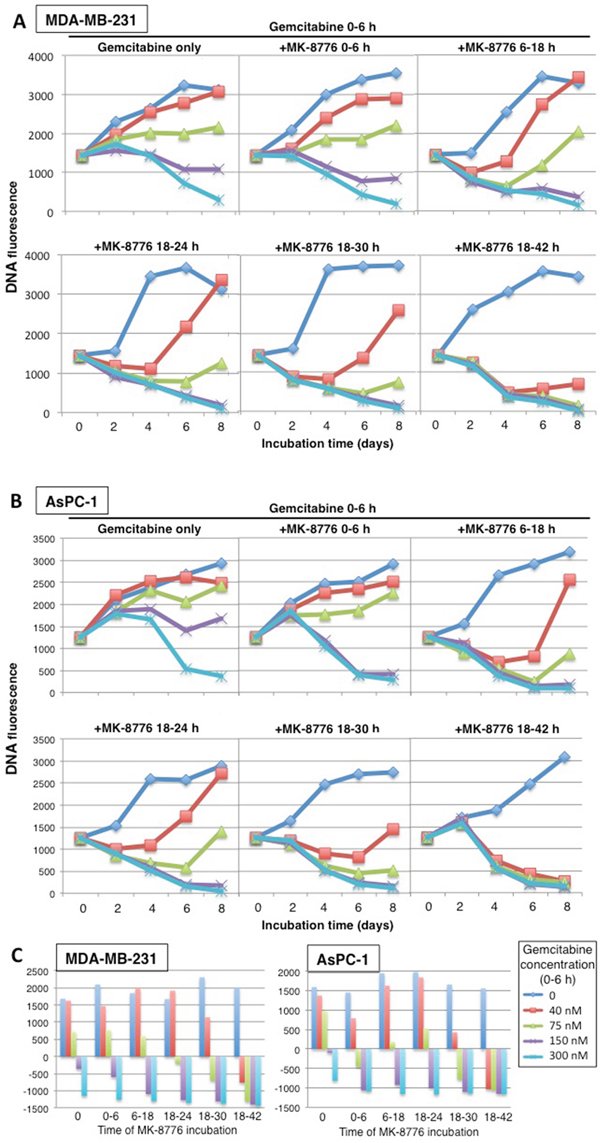 Concentration and time dependent cytotoxicity induced by gemcitabine plus MK-8776.