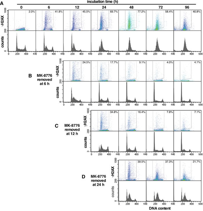 Recovery of AsPC-1 cells from incubation with MK-8776.